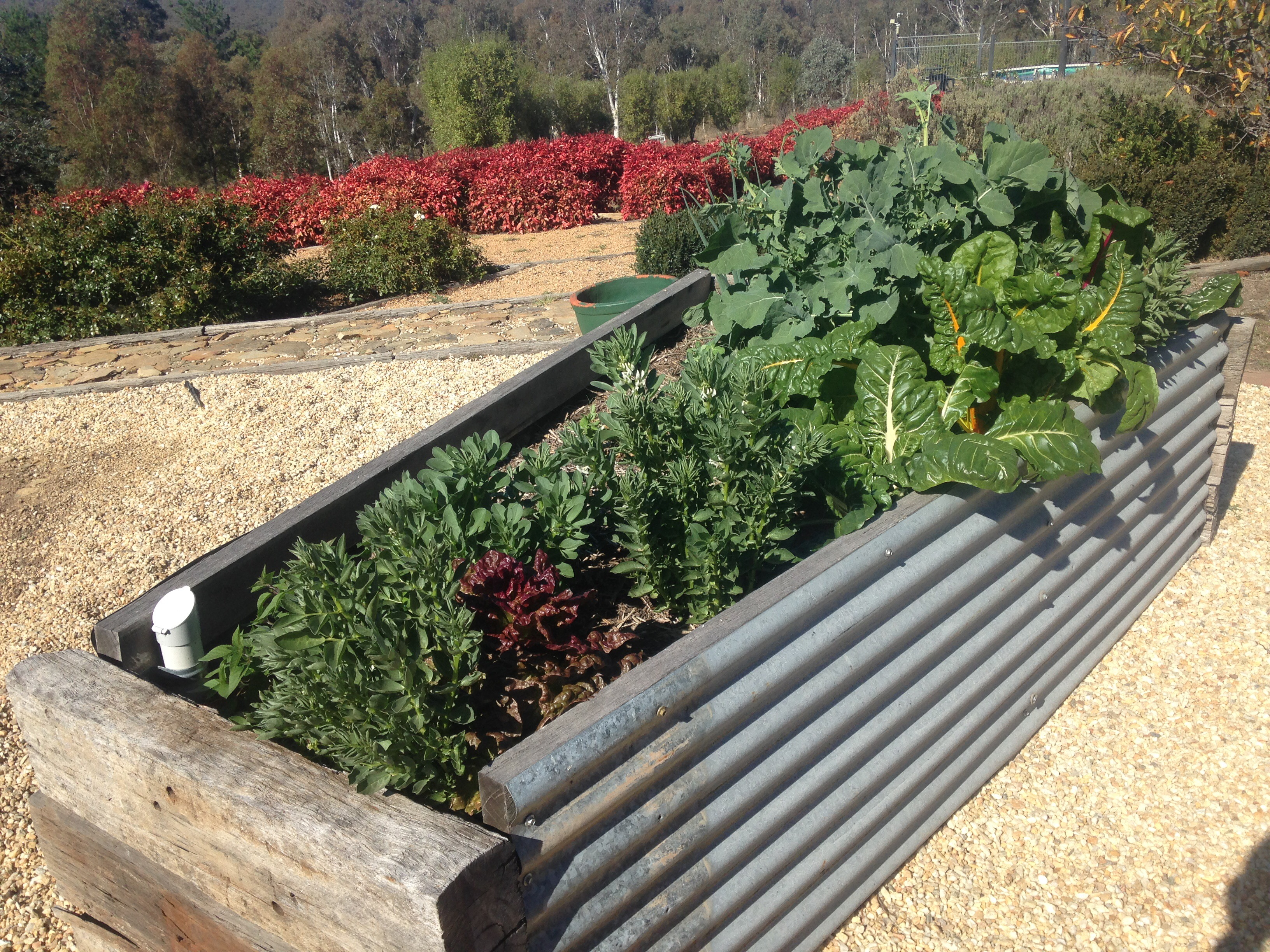 how to build wicking garden beds – part 1