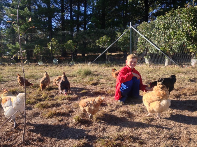 Top reasons to live on a hobby farm